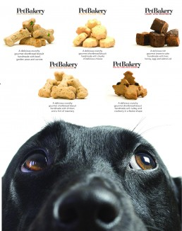 Pet Bakery Branding and Photography